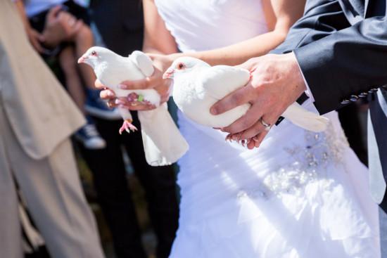 Michelle Dusty Hochzeit Überaschung Tauben weiß Hochzeitstaube Fotograf Hochzeitsfotograf Gütersloh Paderborn - Diana Jill Fotografie