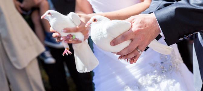 Meine erste große Hochzeit