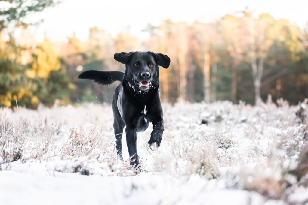 Hundeshooting-Hundefotograf-Fotograf-Hunde-Hund-Hundefotos-Paderborn-Bielefeld-Hövelhof--OWL