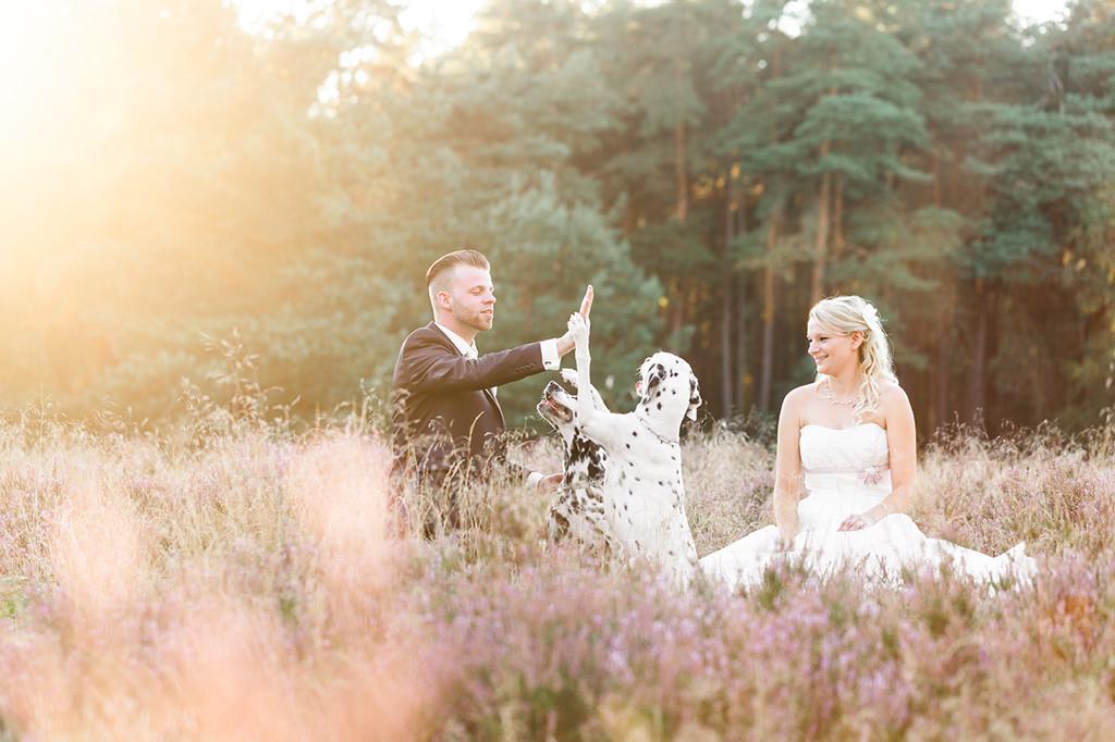 After Wedding Shooting Hundefotograf Hundeshooting Hochzeitsshooting Hochzeit Hochzeitsfotograf Kreis Paderborn Gütersloh Hövelhof Rehburg Rehburg-Loccum